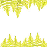 Ram med gröna sidor av ormbunken Arkivfoto