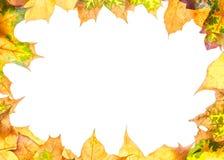 Ram med leaves Fotografering för Bildbyråer