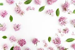 Ram med lilablommor och sidor på vit bakgrund lekmanna- lägenhet, över huvudet sikt fotografering för bildbyråer