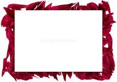 Ram med pionkronblad Royaltyfria Foton