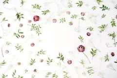Ram med rosa rosor, filialer, sidor och kronblad på vit bakgrund Royaltyfri Bild