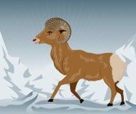 Ram sauvage dans les montagnes Image libre de droits