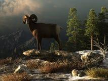 Ram selvagem nas Montanhas Rochosas ilustração do vetor