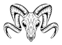 Ram Skull Photographie stock libre de droits