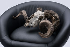 Ram skull in armchair. Ram skull in armchair, isolated on gray background Royalty Free Stock Photos
