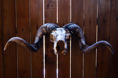 Ram skull Stock Photos