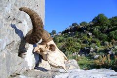 Ram skull. On the stone, Turkey royalty free stock photography