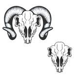 Ram skull. vector illustration. Royalty Free Stock Photos
