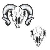 Ram skull. vector illustration. Royalty Free Stock Photos