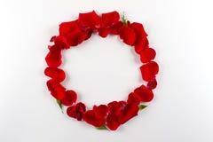 Ram som göras av kronblad för röda rosor för sammet på vit bakgrund Lekmanna- lägenhet, fotografering för bildbyråer