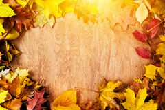Ram som göras av nedgångsidor på trä höstbakgrundscloseupen colors orange red för murgrönaleaf royaltyfria bilder