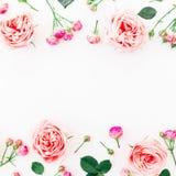 Ram som göras av purpurfärgade rosor och knoppar på vit bakgrund Lekmanna- lägenhet, bästa sikt Blom- modell av rosa blommor Royaltyfri Fotografi