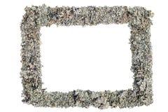 Ram som göras av rengrå färgmossa isolerat Royaltyfria Bilder