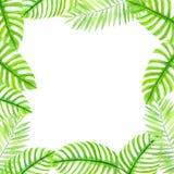 Ram som göras av tropiska sidor Arkivbild