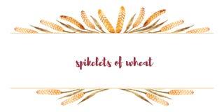 Ram som göras av vetespikelets med utrymme för text Autumn Harvest stock illustrationer