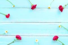 Ram som göras av vita lösa blommor och röda krysantemumblommor på blå träbakgrund royaltyfria foton