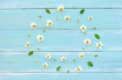 Ram som göras av vita lösa blommor och sidor på blå träbakgrund royaltyfri foto