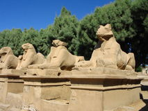 Ram sphinx. Four ram sphinxes Stock Images