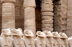 Ram sphinxes. Ram headed sphinxes along main Luxor temple boulevard,Egypt Royalty Free Stock Image