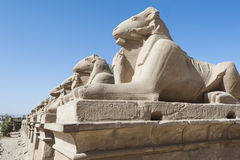 Ram sphinxes at Karnak temple Royalty Free Stock Photography