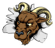 Ram sports mascot breakthrough Royalty Free Stock Image