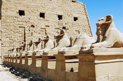 Ram statues at the entrance to Karnak Temple. In Egypt Royalty Free Stock Photography