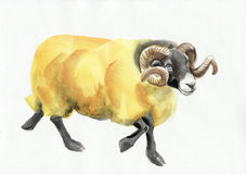 Ram watercolor painting Royalty Free Stock Photos