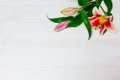 Rama białe leluje na białego drewnianego tła odgórnym widoku Kwitnie leluja bukieta białych kwiatów pięknego kwiecistego tło zdjęcia royalty free