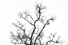 Rama blanco y negro Fotografía de archivo