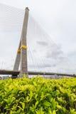 Rama8 Brücke, Thailand Stockbilder