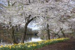 Rama Brook Park Imagen de archivo libre de regalías
