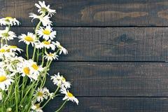 Rama chamomile kwitnie na ciemnym nieociosanym drewnianym tle z obrazy stock