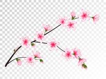 Rama china de la cereza con el ejemplo de las flores stock de ilustración