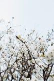 Rama con el ?rbol de las flores blancas en primavera imágenes de archivo libres de regalías