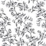 Rama con las flores y las hojas, mano gráfica dibujada - modelo inconsútil con el árbol del flor de la manzana en blanco fotos de archivo