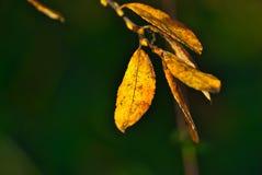 Rama con las hojas otoñales y el fondo defocused imágenes de archivo libres de regalías