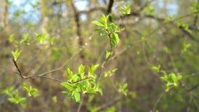Rama con las hojas verdes en la puesta del sol almacen de video