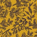 Rama con las nueces de pistacho, los granos de cacao, las almendras, los anacardos y bosquejo del ejemplo del drenaje de la mano  libre illustration