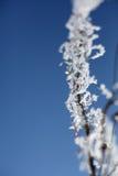 Rama congelada Imagen de archivo libre de regalías