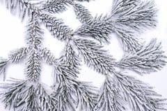 Rama congelada del pino Imagen de archivo