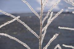 Rama congelada temprano por la mañana Fotos de archivo libres de regalías