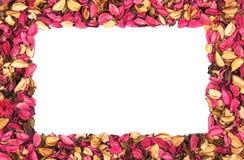 Rama czerwoni kwiatów płatki na bielu Obraz Stock