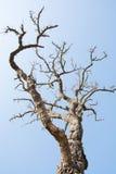 Rama de árbol Fotos de archivo