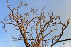 Rama de árbol Imagen de archivo libre de regalías