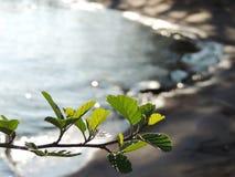 Rama de árbol Fotografía de archivo