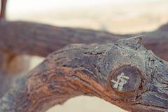 Rama de árbol Imagenes de archivo
