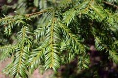 Rama de árbol Fotografía de archivo libre de regalías