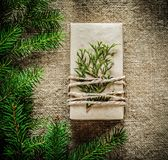 Rama de árbol de abeto del thuya de la caja de regalo en fondo del empaquetamiento Fotos de archivo