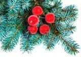 Rama de árbol de abeto de la Navidad con las decoraciones rojas aisladas en blanco Fotos de archivo