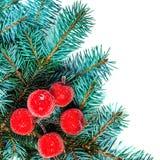 Rama de árbol de abeto de la Navidad con las decoraciones rojas aisladas en blanco Fotos de archivo libres de regalías